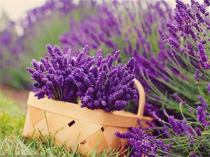 natural essential oils for sale- CGhealthfood.jpg